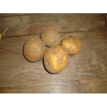 pomme de terre agria 2.5kg BIO
